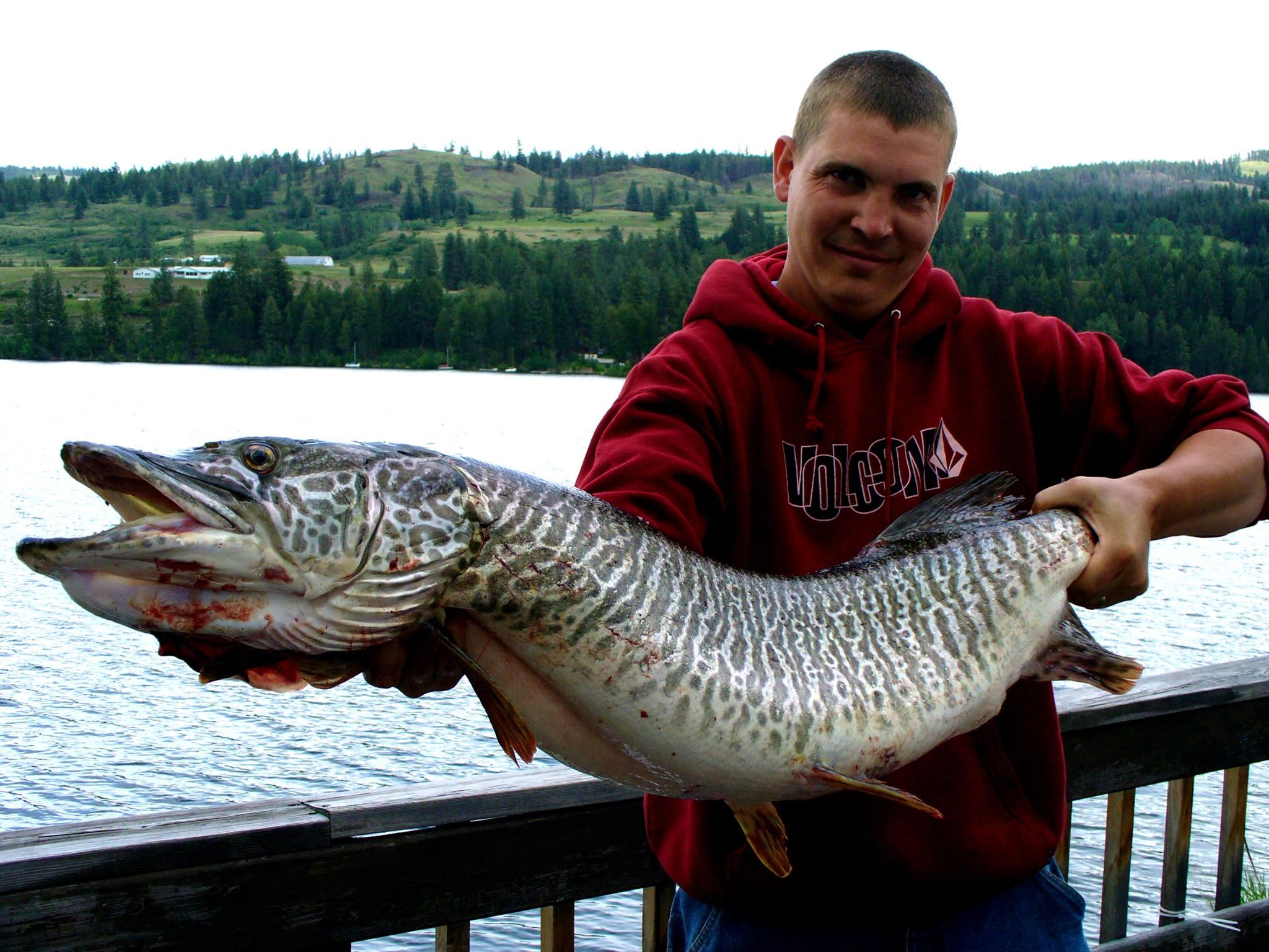 Tiger Muskie: Fishing at Tiffanys Resort on Curlew Lake